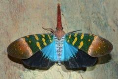 Μύγα φαναριών Στοκ Φωτογραφίες
