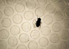 μύγα φυσαλίδων Στοκ εικόνες με δικαίωμα ελεύθερης χρήσης