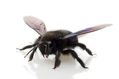 μύγα στοκ εικόνες με δικαίωμα ελεύθερης χρήσης