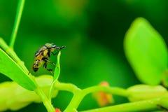 Μύγα Στοκ εικόνα με δικαίωμα ελεύθερης χρήσης