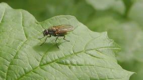 Μύγα απόθεμα βίντεο