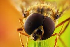 Μύγα Shinichi σε μια λεπίδα της χλόης στοκ φωτογραφίες
