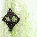 μύγες αλόγων Στοκ Εικόνες