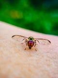 Μύγες ελαφριού κτυπήματος πίσω Στοκ Εικόνες