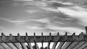 Μύγες πουλιών μέσω ενός ελαφριού νεφελώδους ουρανού στοκ φωτογραφία με δικαίωμα ελεύθερης χρήσης