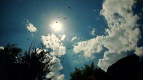 Μύγες πουλιών ενάντια στον μπλε νεφελώδη ουρανό φιλμ μικρού μήκους