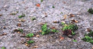 Μύγες που πετούν κοντά στα θαλάσσια φυτά και κύματα θάλασσας υπολειμμάτων που παρουσιάζονται στην ακτή απόθεμα βίντεο