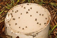 Μύγες σκώρων στοκ εικόνα με δικαίωμα ελεύθερης χρήσης