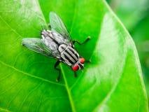 Μύγες στα πράσινα φύλλα Στοκ εικόνες με δικαίωμα ελεύθερης χρήσης