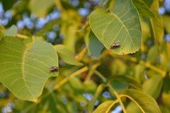 μύγες Στοκ φωτογραφίες με δικαίωμα ελεύθερης χρήσης