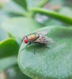 μύγες Στοκ Φωτογραφία