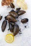 Μύδια με το λεμόνι και το θαλασσινό κοχύλι στον πάγο στοκ φωτογραφίες