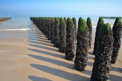 Μύδια που καλλιεργούνται στους πόλους bouchots στην παραλία κοντά στην ΚΑΠ Gris Nez, υπόστεγο δ ` Opale, Pas-de-Calais, Hauts de  Στοκ Εικόνες