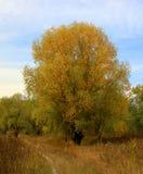 μύθοι του φθινοπώρου Στοκ φωτογραφίες με δικαίωμα ελεύθερης χρήσης