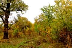 μύθοι του φθινοπώρου Στοκ Εικόνες