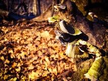Μύκητας δέντρων φθινοπώρου στοκ εικόνα με δικαίωμα ελεύθερης χρήσης