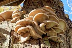 Μύκητας σε ένα δέντρο Στοκ Φωτογραφία