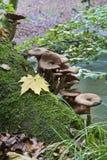 Μύκητας στο δάσος στοκ εικόνα