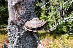 Μύκητας στο phylum Στοκ Φωτογραφία