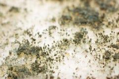 μύκητας ψωμιού Στοκ Εικόνα