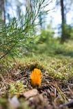 μύκητας δάχτυλων Στοκ φωτογραφία με δικαίωμα ελεύθερης χρήσης