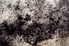 μύκητας στοκ εικόνες