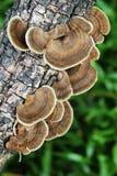μύκητας Στοκ φωτογραφίες με δικαίωμα ελεύθερης χρήσης