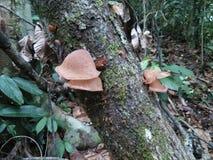 Μύκητες ζελατίνας Στοκ Φωτογραφίες