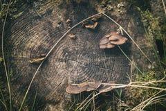 Μύκητες στον ξεπερασμένο κορμό δέντρων στοκ φωτογραφία