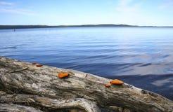 Μύκητες στο κούτσουρο Στοκ Εικόνα
