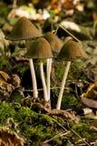 μύκητες Στοκ Φωτογραφία
