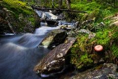 Μύκητες 41 Στοκ φωτογραφία με δικαίωμα ελεύθερης χρήσης