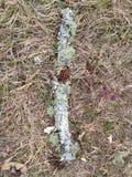 μύκητες Στοκ φωτογραφίες με δικαίωμα ελεύθερης χρήσης