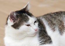 μύτη κουνουπιών γατών στοκ εικόνες με δικαίωμα ελεύθερης χρήσης