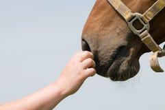 μύτη s αλόγων Στοκ φωτογραφίες με δικαίωμα ελεύθερης χρήσης