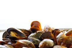 μύδια που βράζουν στον ατ&m Στοκ φωτογραφίες με δικαίωμα ελεύθερης χρήσης