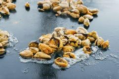 Μύδια που τηγανίζονται Στοκ Εικόνες