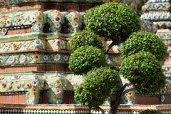 νάνο ταϊλανδικό δέντρο μπον&sig Στοκ Φωτογραφία