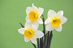 νάρκισσοι λουλουδιών στοκ φωτογραφίες