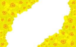 νάρκισσοι λουλουδιών &sigma Στοκ εικόνα με δικαίωμα ελεύθερης χρήσης