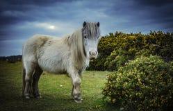 Νέα δάσος, πόνι και άλογο Στοκ φωτογραφία με δικαίωμα ελεύθερης χρήσης
