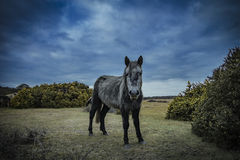 Νέα δάσος, πόνι και άλογο Στοκ εικόνες με δικαίωμα ελεύθερης χρήσης
