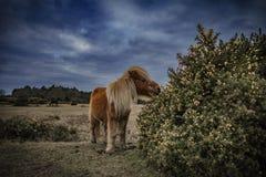 Νέα δάσος, πόνι και άλογο Στοκ Εικόνα