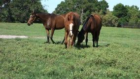 Νέα άλογα που βόσκουν σε ένα λιβάδι απόθεμα βίντεο