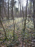 Νέα δέντρα σε μια κρύα δασώδη περιοχή στοκ εικόνα με δικαίωμα ελεύθερης χρήσης