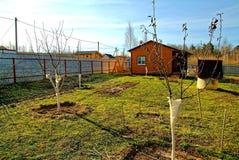 Νέα δέντρα της Apple την πρώιμη άνοιξη Στοκ εικόνα με δικαίωμα ελεύθερης χρήσης