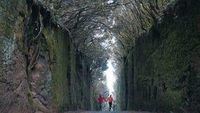 Νέα αισιόδοξα τρεξίματα ζευγών μεταξύ των βράχων από έναν δρόμο που καλύπτεται από τα δέντρα στο πάρκο φύσης Anaga Tenerife Ισχυρ φιλμ μικρού μήκους