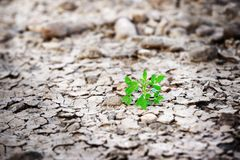 Νέα ανάπτυξη δέντρων εγκαταστάσεων στη ραγισμένη γη, πράσινη χλόη ris θέματος Στοκ εικόνες με δικαίωμα ελεύθερης χρήσης