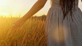Νέα αυτιά σίτου αφής χεριών γυναίκας στο ηλιοβασίλεμα ή την ανατολή Αγροτικό και φυσικό τοπίο χώρα, φύση, καλοκαιρινές διακοπές φιλμ μικρού μήκους