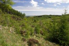 Νέα αύξηση του δάσους Στοκ Εικόνα